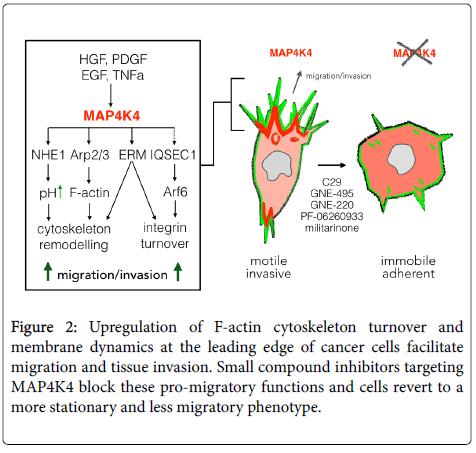 carcinogenesis-mutagenesis-cytoskeleton
