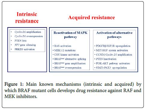 carcinogenesis-mutagenesis-drug-resistance