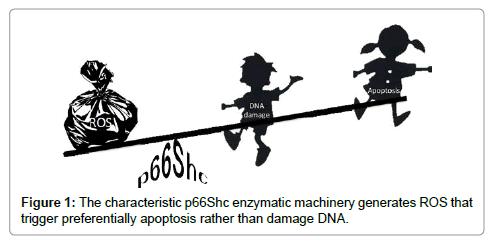 carcinogenesis-mutagenesis-enzymatic-machinery