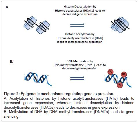 carcinogenesis-mutagenesis-gene-expression