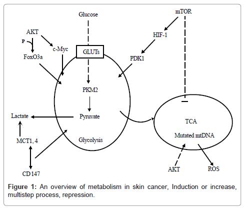 carcinogenesis-mutagenesis-overview-metabolism