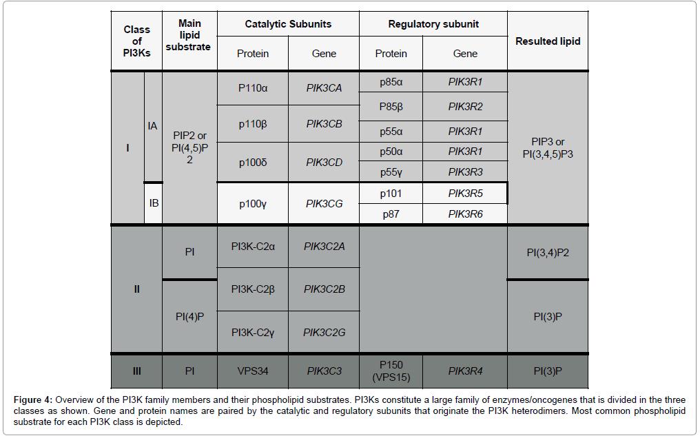 carcinogenesis-mutagenesis-phospholipid-large