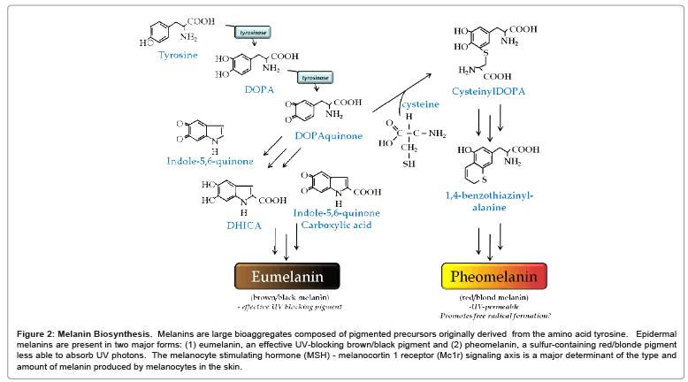 carcinogenesis-mutagenesis-skin-color