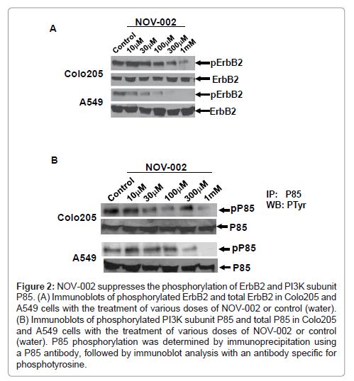 carcinogenesis-mutagenesis-suppresses-phosphorylation