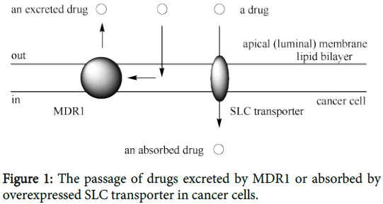 carcinogenesis-mutagenesis-transporter-cancer-cells