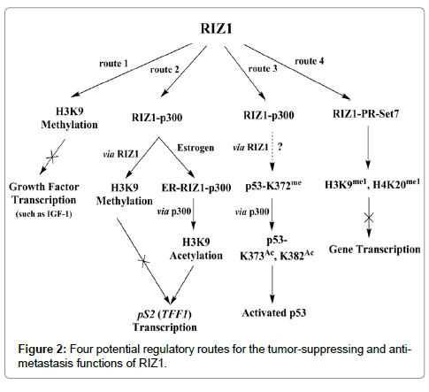 carcinogenesis-mutagenesis-tumor-suppressing
