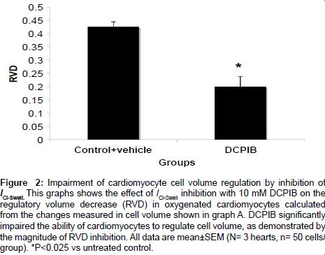 cardiovascular-pharmacology-Impairment-cardiomyocyte