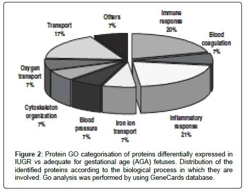 cardiovascular-pharmacology-Protein-GO-categorisation