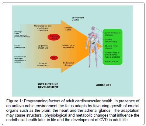 cardiovascular-pharmacology-adult-cardiovascular-health