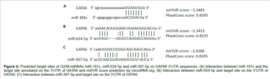 cell-developmental-Predicted-target