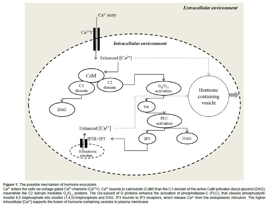 cell-developmental-proteins-enhance