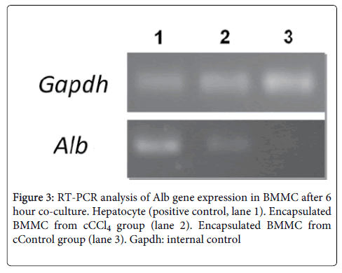 cell-science-therapy-Alb-gene-expression