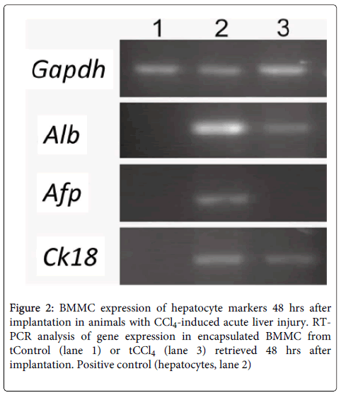 cell-science-therapy-BMMC-expression