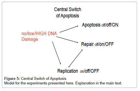 cell-science-therapy-Central-Switch