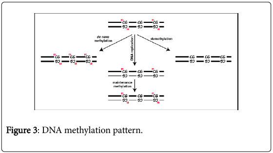 cell-science-therapy-DNA-methylation