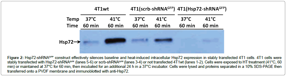 cell-science-therapy-heat-induced-intracellular
