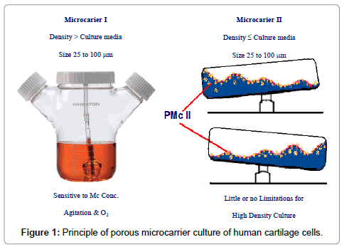 cell-science-therapy-porous-microcarrier