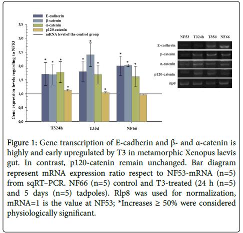 cell-signaling-Gene-transcription