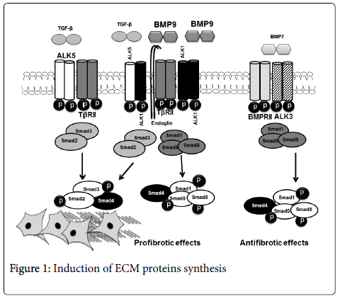 cell-signaling-Induction-ECM