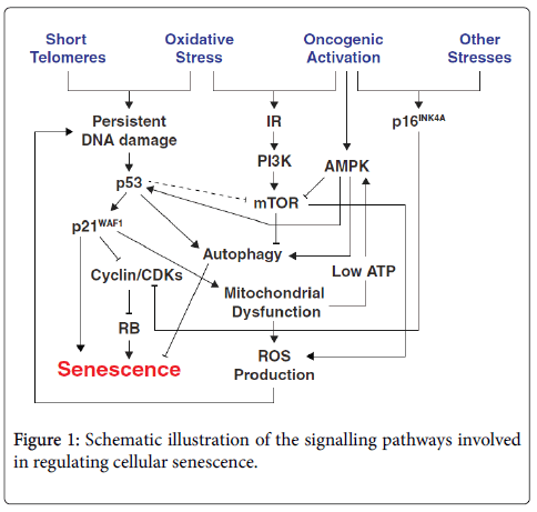 cell-signaling-Schematic-illustration