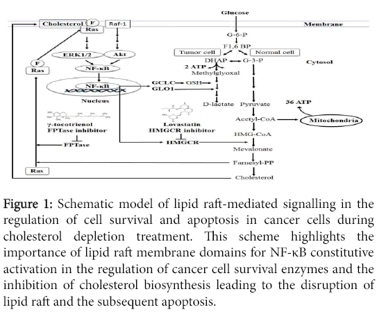 cell-signaling-Schematic-model-lipid-raft-mediated