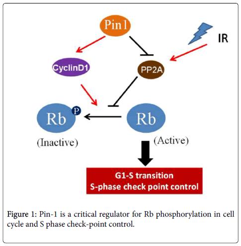 cell-signaling-critical-regulator
