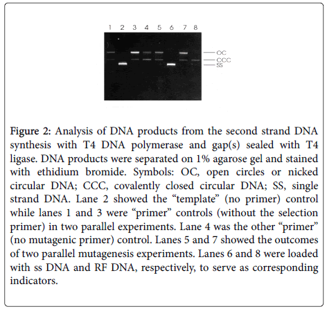 chemical-biology-therapeutics-DNA-polymerase
