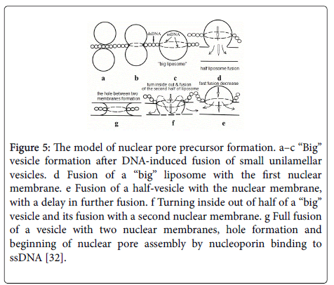 chemical-biology-therapeutics-nuclear-pore-precursor