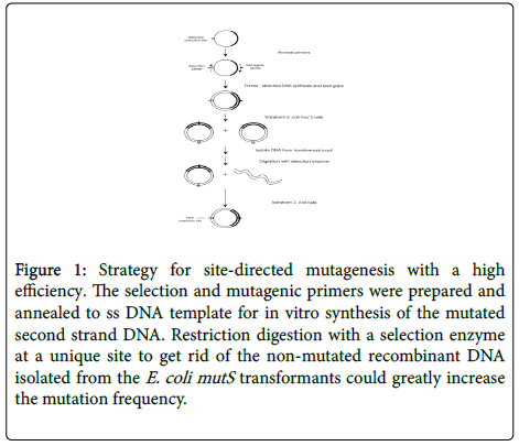 chemical-biology-therapeutics-site-directed-mutagenesis