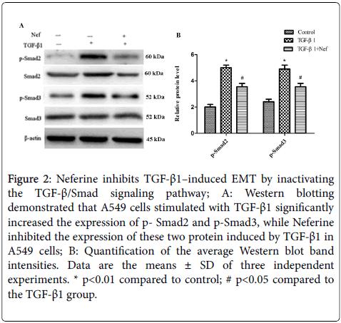 chemotherapy-Western-blotting