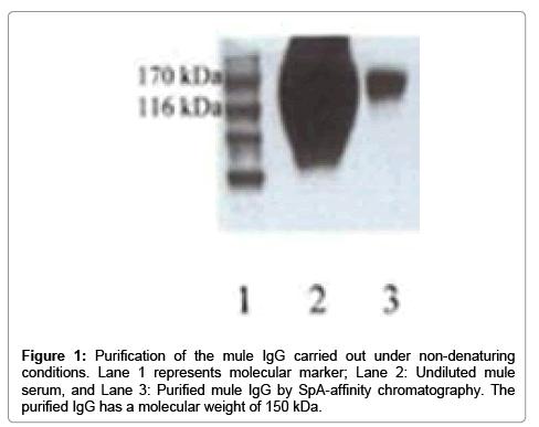 chromatography-separation-techniques-Purification-non-denaturing