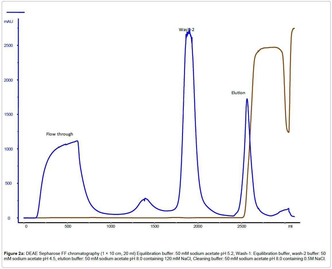 chromatography-separation-techniques-Sepharose-chromatography-buffer