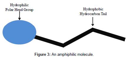 chromatography-separation-techniques-amphiphilic-molecule