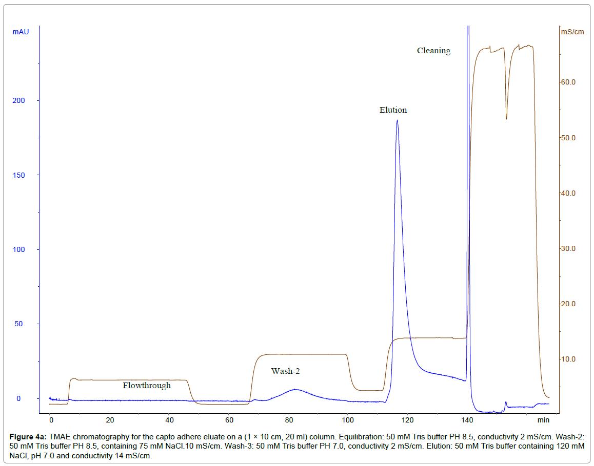 chromatography-separation-techniques-chromatography-capto-adhere