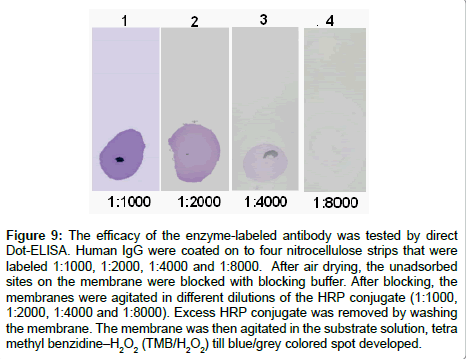 chromatography-separation-techniques-enzyme-labeled-antibody