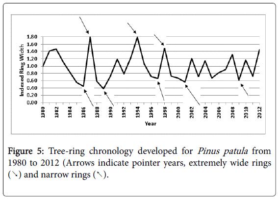 climatology-weather-forecasting-Tree-ring-chronology