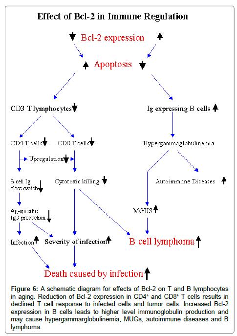 clinical-cellular-immunology-schemati-diagram