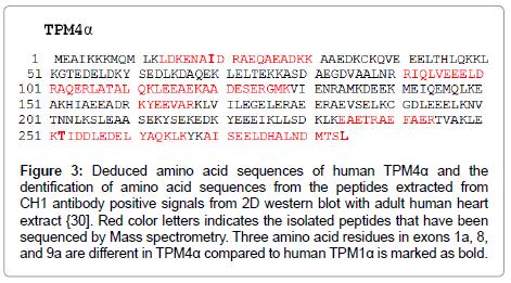 clinical-experimental-cardiology-Deduced-amino-acid