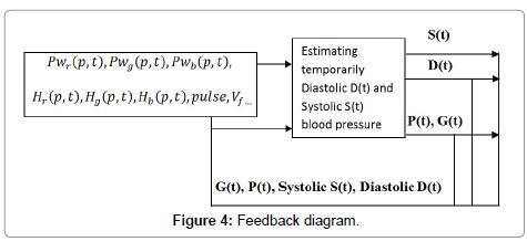 clinical-experimental-cardiology-Feedback-diagram