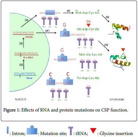 clinical-experimental-pathology-Effects-RNA-protein