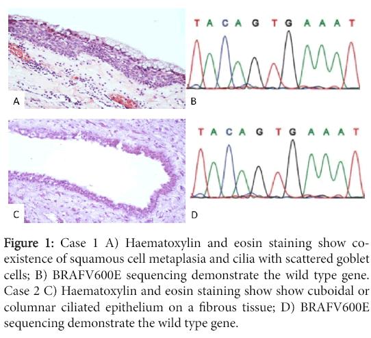 clinical-experimental-pathology-Haematoxylin-eosin-staining-show