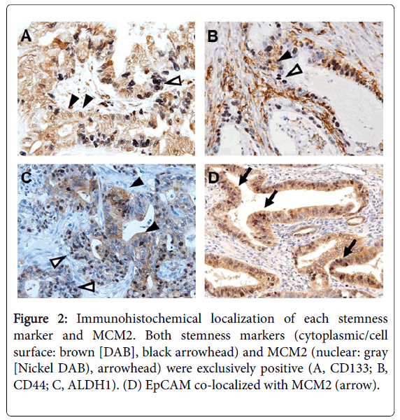 clinical-experimental-pathology-Immunohistochemical-localization-stemness