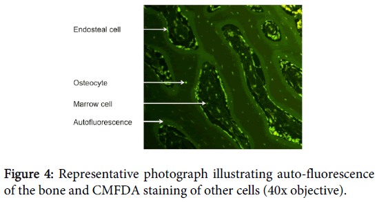 clinical-experimental-pathology-illustrating-auto-fluorescence