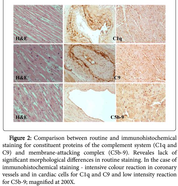 clinical-experimental-pathology-routine-immunohistochemical-staining