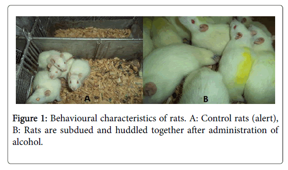 clinical-experimental-pharmacology-characteristics-rats
