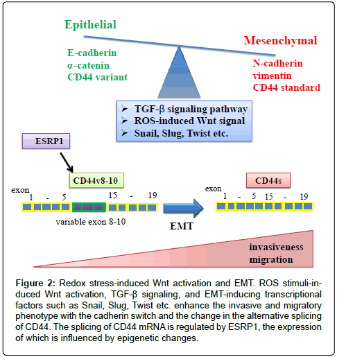 clinical-experimental-pharmacology-splicing