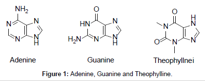 clinical-medical-biochemistry-Adenine-Guanine
