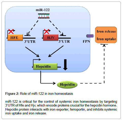 clinical-medical-genomics-iron-homeostasis