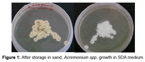 clinical-microbiology-After-storage-sand