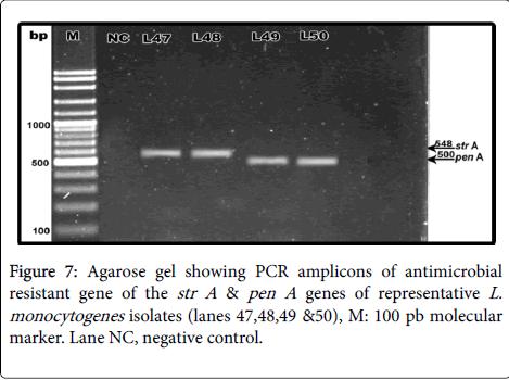 clinical-microbiology-Agarose-gel-str-pen
